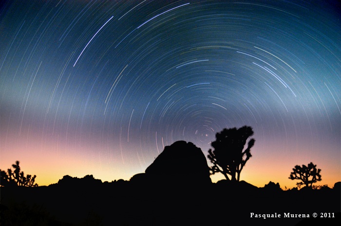 My photo of Star Trails at Joshua Tree National Park