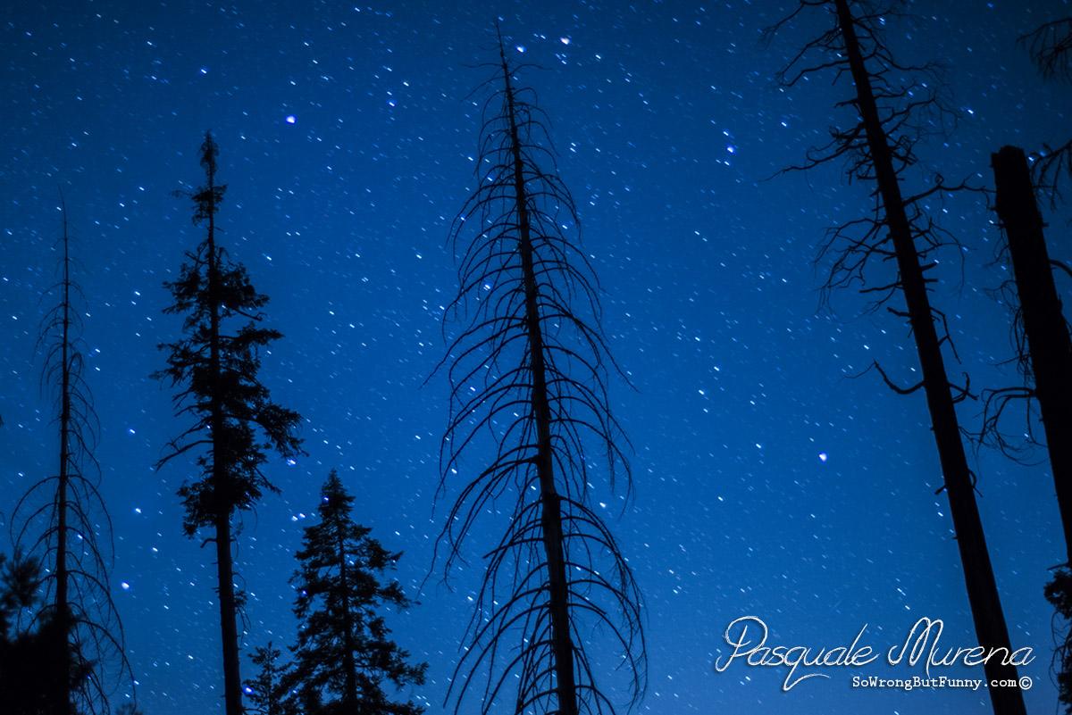 SequoiaStarrySnow