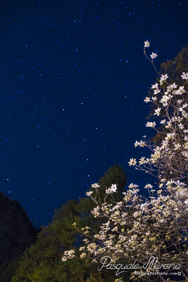 Dogwoods with the Big Dipper
